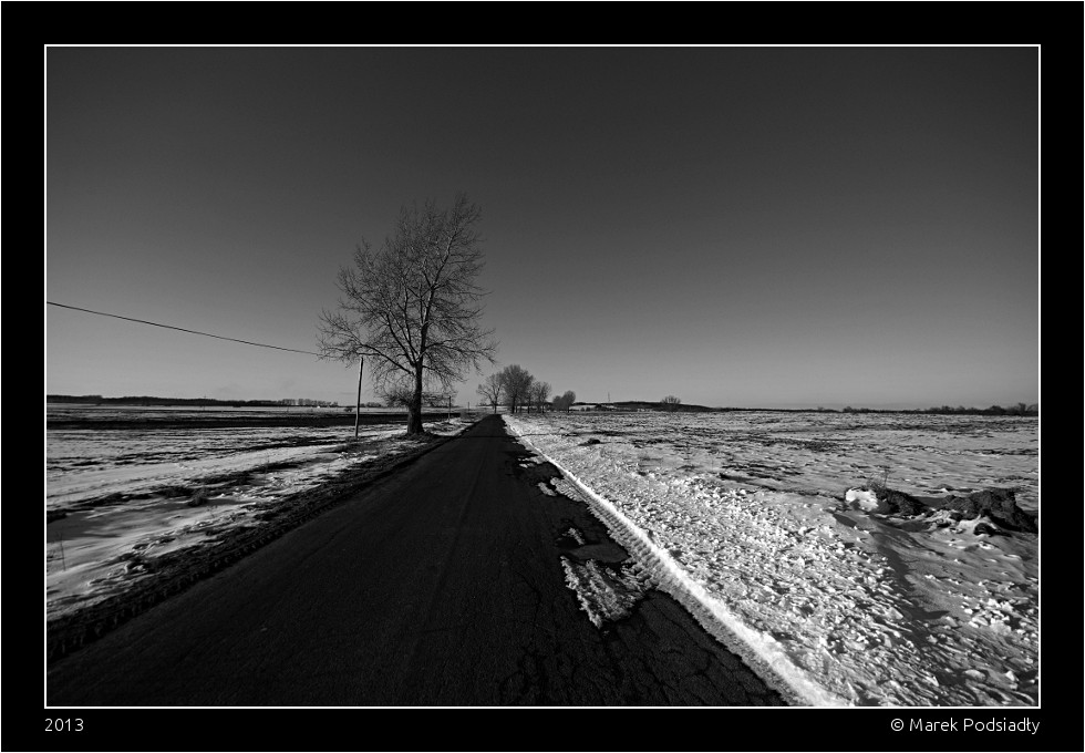 Krajobraz z drogą i drzewami