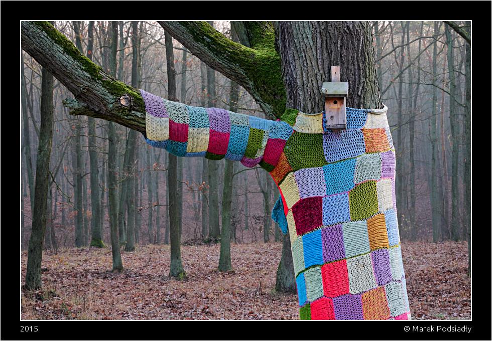 Drzewo w swetrze
