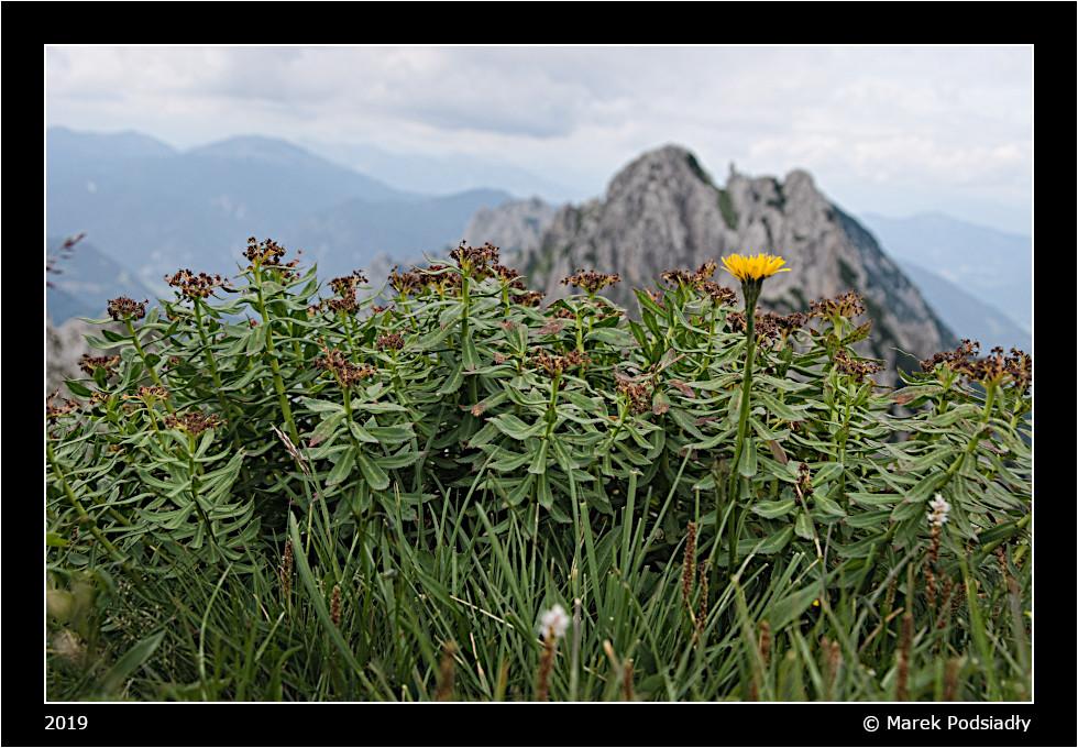 Kwiatek na tle gór